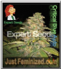 Expert Critical Blue Auto Female 5 Marijuana Seeds